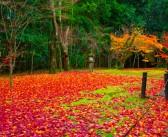【日本を楽しもう】10月の伝統行事・イベント・食材 (神無月 紅葉狩)